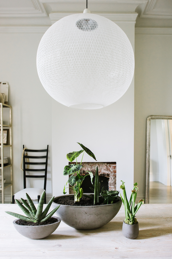 how to add major style to your space with houseplants
